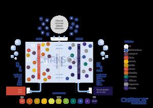 Infografik over funktionerne i et elektrolysekammer - hvordan virker en ioniseringsmaskine