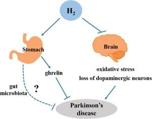 Den neurobeskyttende effekt af H2 ved Parkinsons.