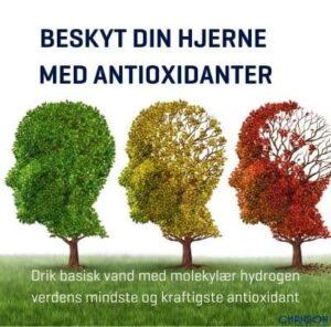 Beskyt din hjerne med antioxidanter