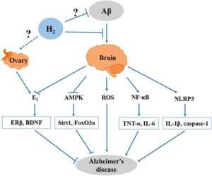 Molekylære mekanismer i H2 i forhold til forbedring af Ab-induceret Alzheimer